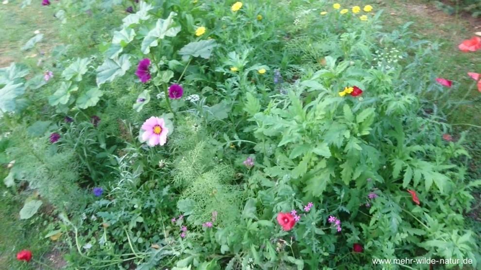 Eine neues kleines Wildblumenbeet in Lanitz-Hassel-Tal.