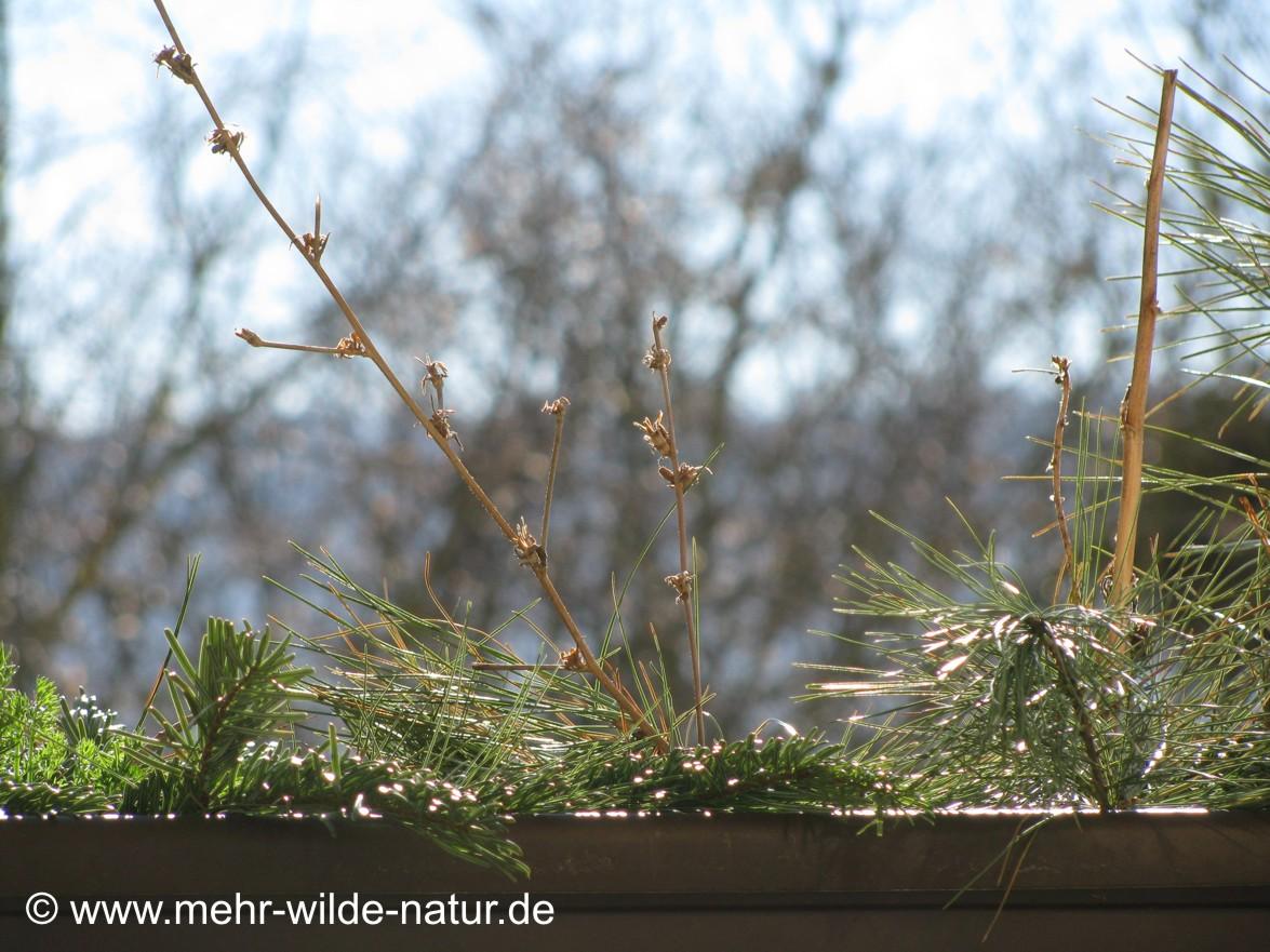 Die erste Frühlingssonne wärmt den Wildblumenkasten.