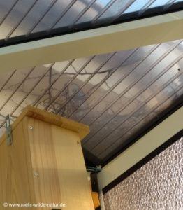 Ein Ringeltaubenweibchen sitzt im neu gebauten Nest auf dem Balkondach.