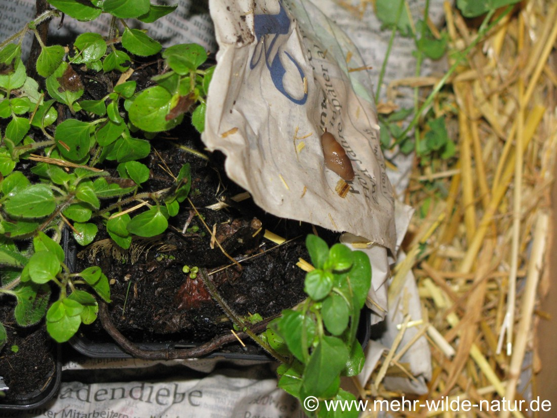 Die Pflanzen für die Baumscheiben kamen als Schneckenpost