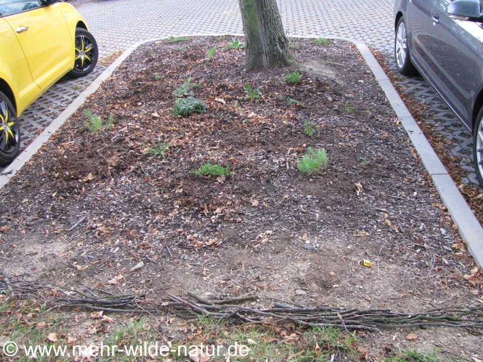 Große Baumscheibe bepflanzt.
