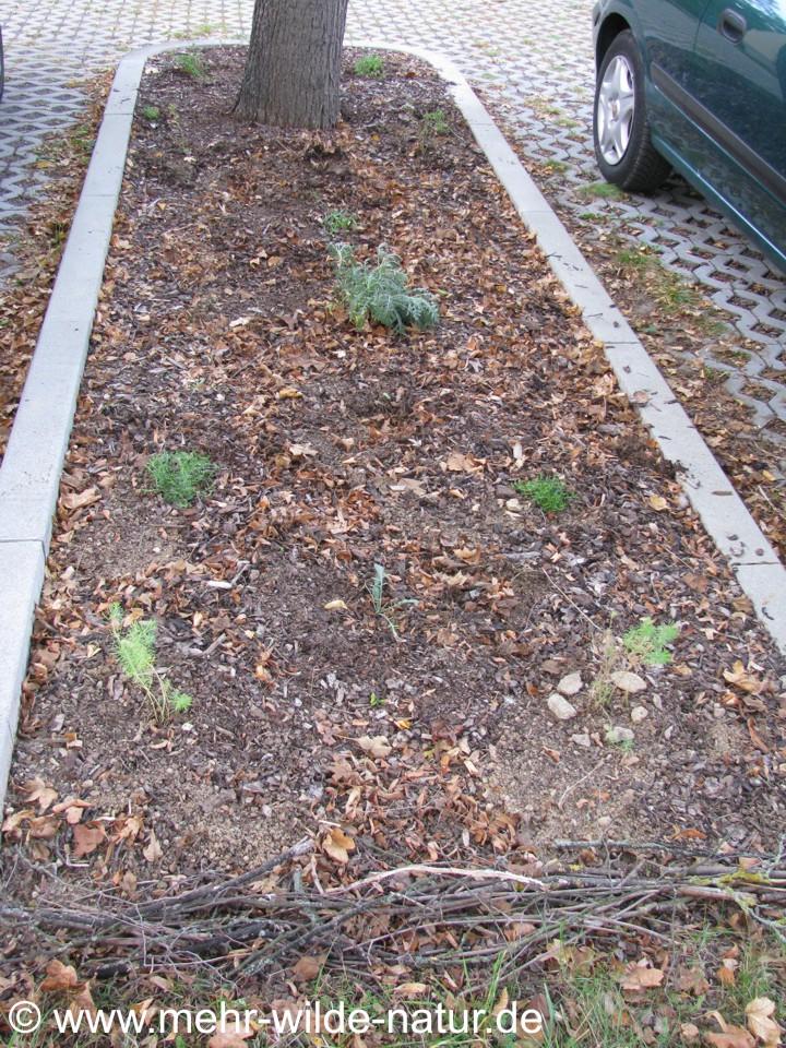 Kleine Baumscheibe bepflanzt.
