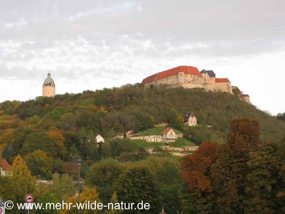 Dicker Wilhelm und Neuenburg