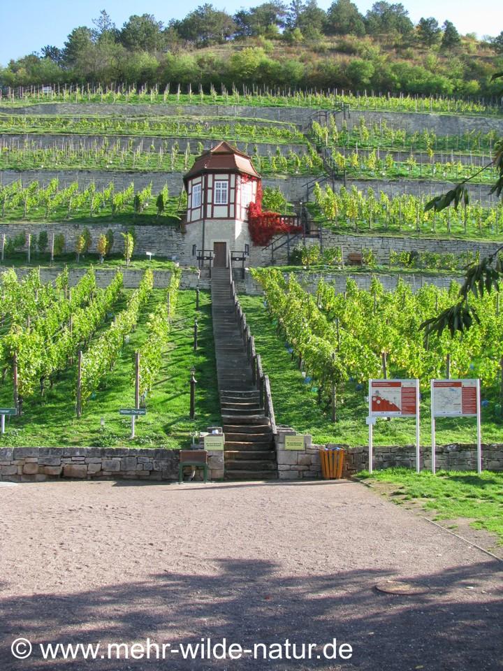 Weinbergshaus im Herzoglichen Weinberg.