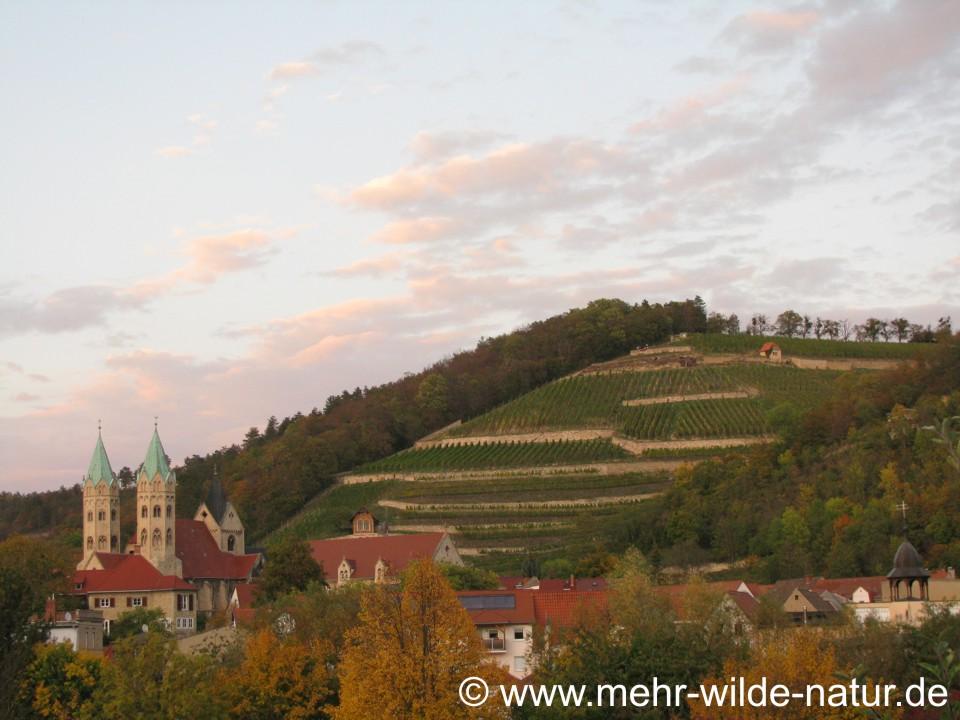 Marienkirche und Edelacker