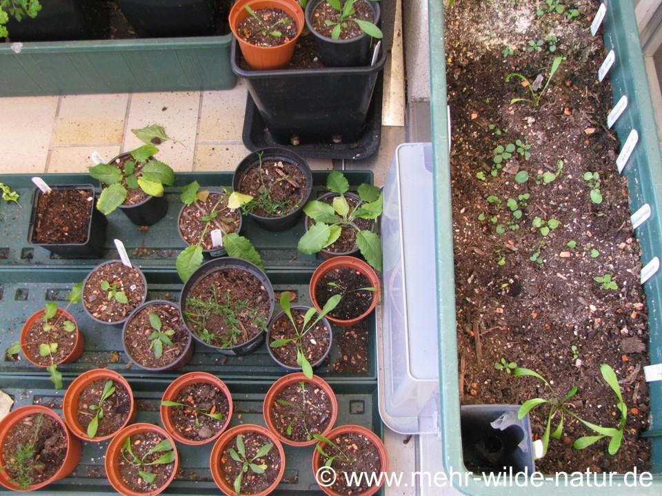 Jungpflanzen auf dem Balkon Ende 2019