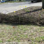 Kleiner Totholzzaun zur Abgrenzung der Baumscheibenbepflanzung