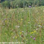 artenreiche Wiese am Stadtrand Jena-Nord