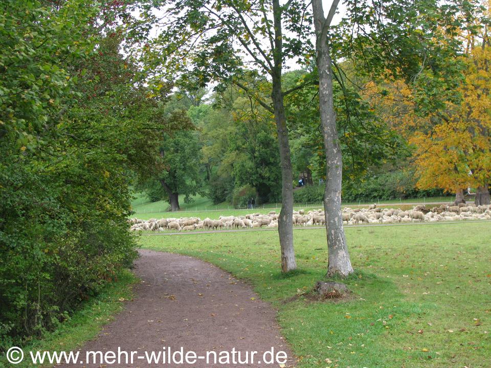 Park an der Ilm in Weimar