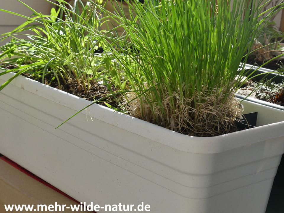 weißer Pflanzkasten für Kräuter