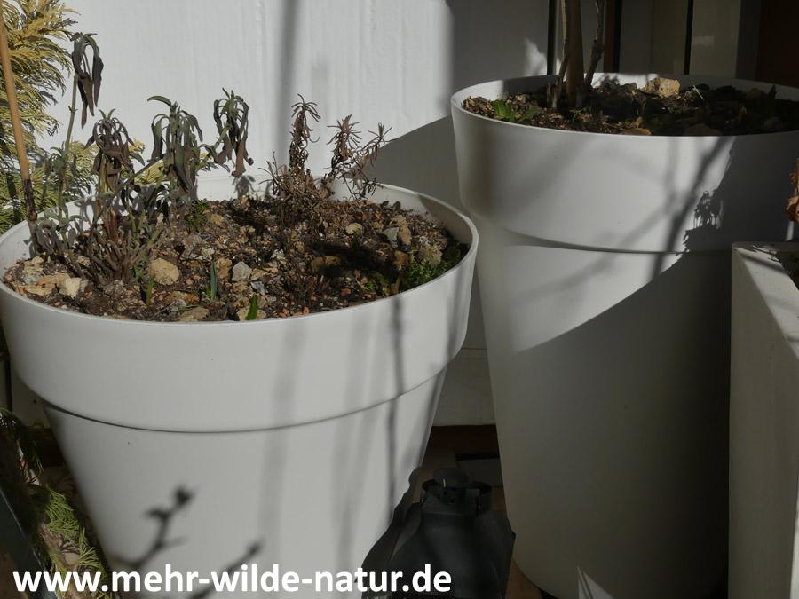 Pflanzkübel von Elho für Balkon und Terrasse