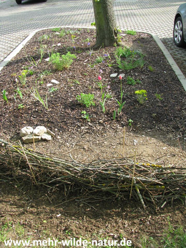 meine bepflanzte Baumscheibe am Parkplatz