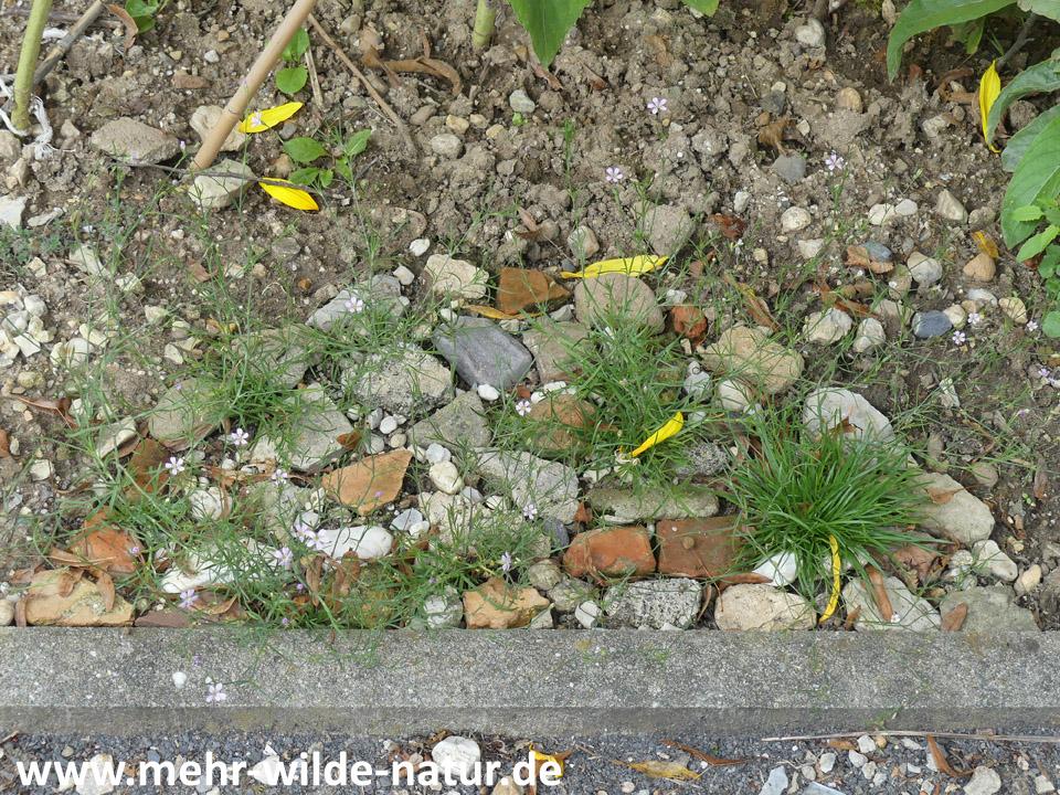 Ein kleines Steinmosaik mit Steinbrech-Felsennelke