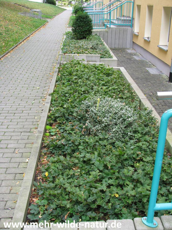 Mit herkömmlichen Bodendeckern bepflanzte Beete vorm Haus.