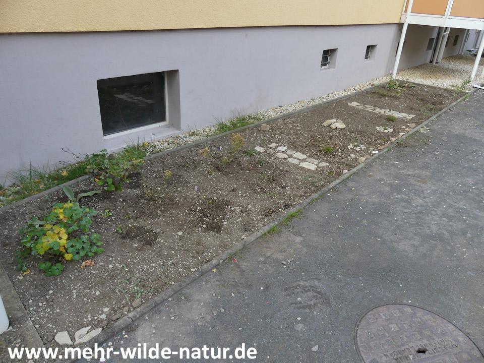 Hausbeet 2 mit den ersten Pflanzen